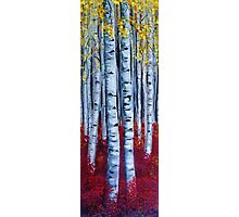 Aspen Forest Tall Photographic Print