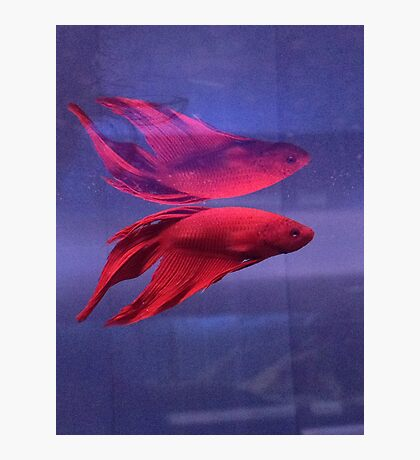 neon reflection Photographic Print