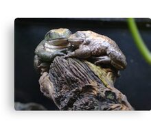 Frogs love Canvas Print
