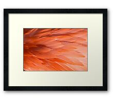 Up close to featherery Framed Print