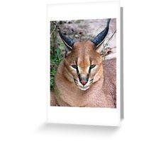 Caracal 2 Greeting Card