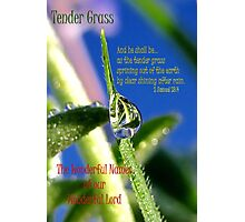 Tender Grass Photographic Print