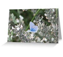 Common Blue Two Greeting Card