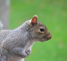 New Forest Squirrel 2 by Lauren McGregor