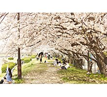 blossom arch Photographic Print