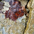 Leaf & Crack by Michael  Herrfurth