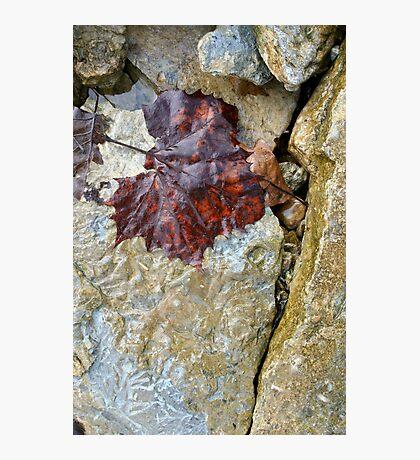 Leaf & Crack Photographic Print