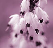 Tiny Bells by Jacquelyne Drainville