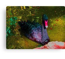 Brilliant, beautiful Black Swan Canvas Print