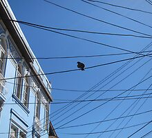 Pigeon on messy Valparaiso's wires by nicomelbourne