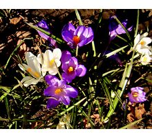 Spring blossom Photographic Print