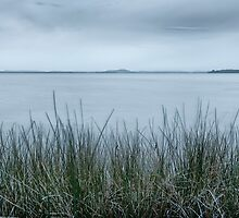 In the reeds by Michael Howard