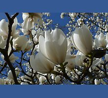 Delicate White Magnolia Flowers by Lawrence Bojkovic