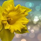 Daffolils by flashcompact