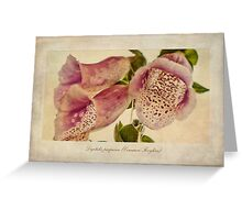 Foxglove Textures Greeting Card