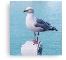 Pretty Seagull  Canvas Print