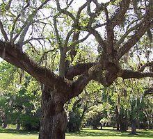 Oak Tree by andreaanderegg