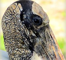 Head of a Wood Stork by AuntDot
