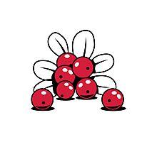 Cranberry Fruit bio healthy Photographic Print