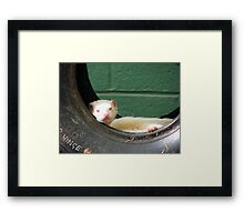 Tyred Ferret Framed Print