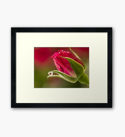 Within the Rose Framed Print