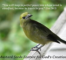 Mustard Seeds Feature Banner for God's Creation by hummingbirds