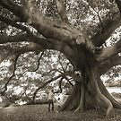 The Largest Tree in the Garden by mark thompson