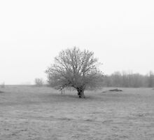 Winter's Oak by Matt Amott