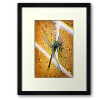 Climbing the Wall... Framed Print