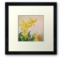 Golden yellow daffodils Framed Print