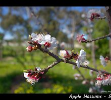 Blossums by shaynetwright