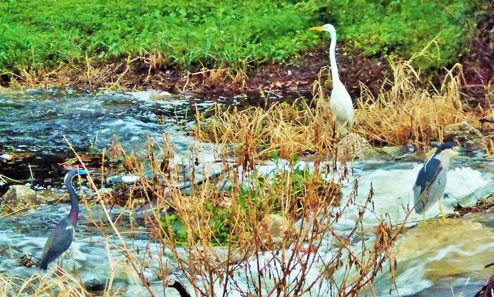 Three Birds on a Florida stream by alan barbour