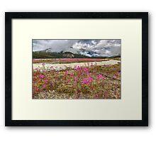 Streams of Pink Framed Print