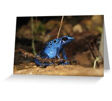 Poison Dart Frog ~ Sapphire Blue  Greeting Card