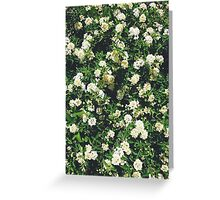 Lot's Of Flowers Greeting Card