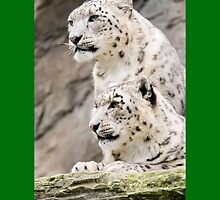 The white tigers by stanlex