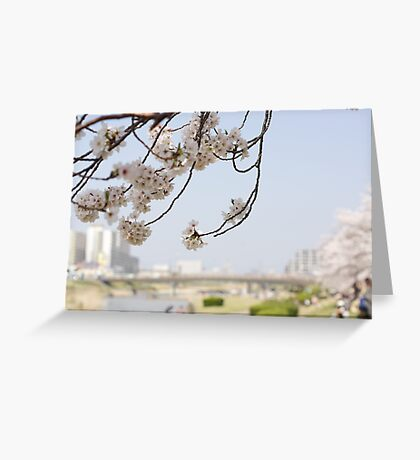 cherry blossoms on a blue sky Greeting Card