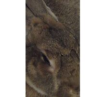 Sleepy Bunny Photographic Print
