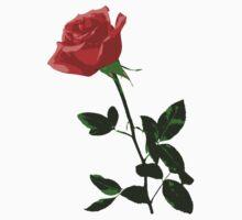 Beautiful Rose Flower by cnstudio