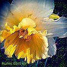 God's Beauty Abounds by Charldia
