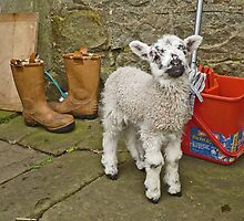 When I grow up I want to be a Sheep by Kat Simmons