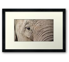 Elephant Close Up Framed Print
