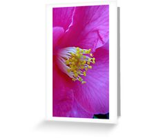 Camellia in Pink Greeting Card