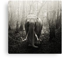 animaly #41 Canvas Print