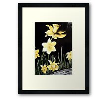 Daffodil Magic Framed Print