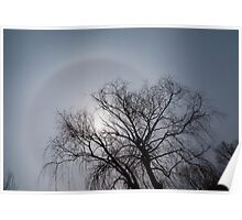 Sun Halo, Trees And Silver Gray Winter Sky Poster