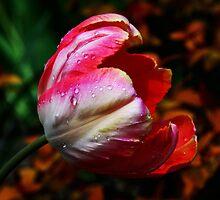 SpringTime! by Doug Norkum