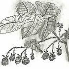 Berries by SharonAHenson
