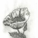 Poppies by Sharon A. Henson