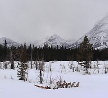 Misty Rockies (panorama) by zumi